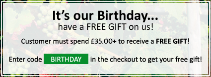 Birthday Offer