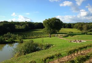 bluebell-vineyard-001