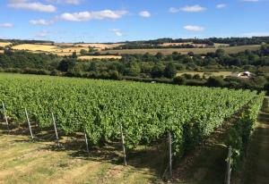 chartham-vineyard-001