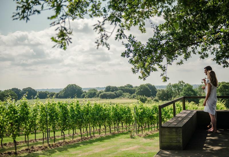 Gusbourne Estate Vineyard