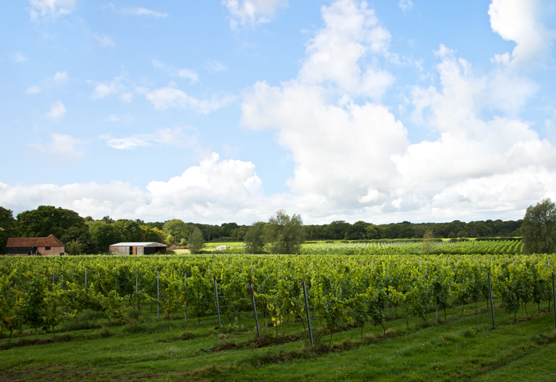 Oxney Organic Estate Vineyard