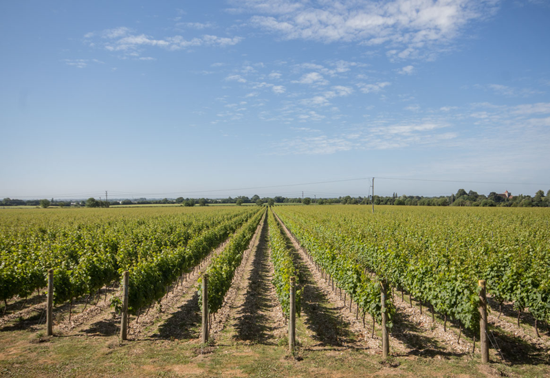 Tinwood Estate Vineyard
