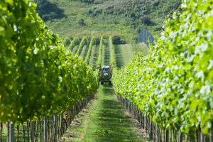 vineyard-tractor-001