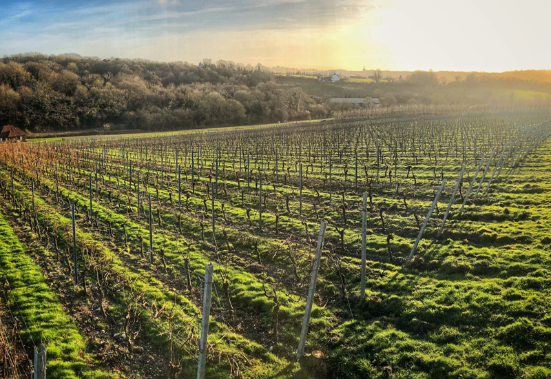 Wiston Estate Vineyard